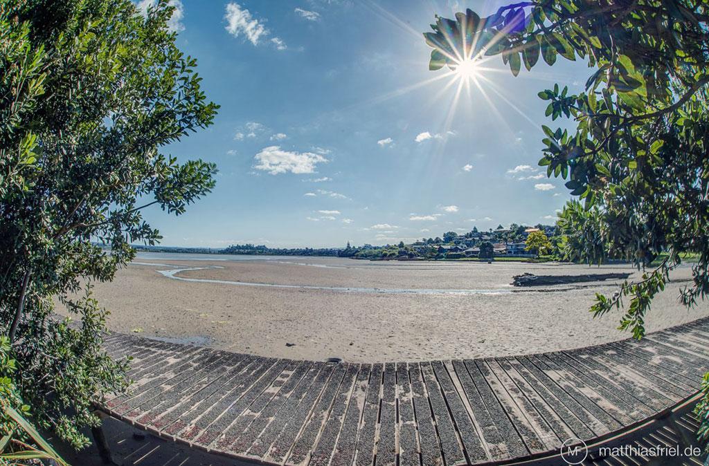 Tauranga Tourist Park board walk